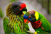 you & me.....forever in love (Lohb) Tags: zoo parrot 70200 youme foreverinlove specanimal canon40d