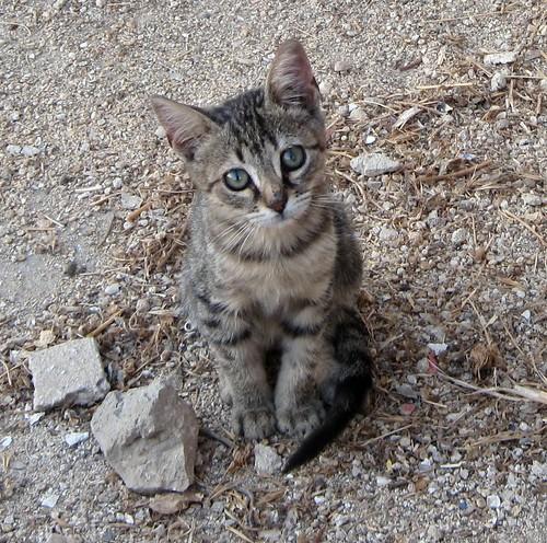 1.Sono.un.gattino.abbandonato