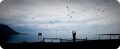 One crazy Welshman vs. annoyed Arctic Terns (Anna BergIind) Tags: birds iceland trkyllisvk vestfirir shilouette westfjords kra arcticterns arctictern strandir flickrchallengegroup krur