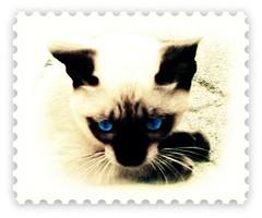 Il gattino (Simply Viola) Tags: cats animals felini felines gatti animali