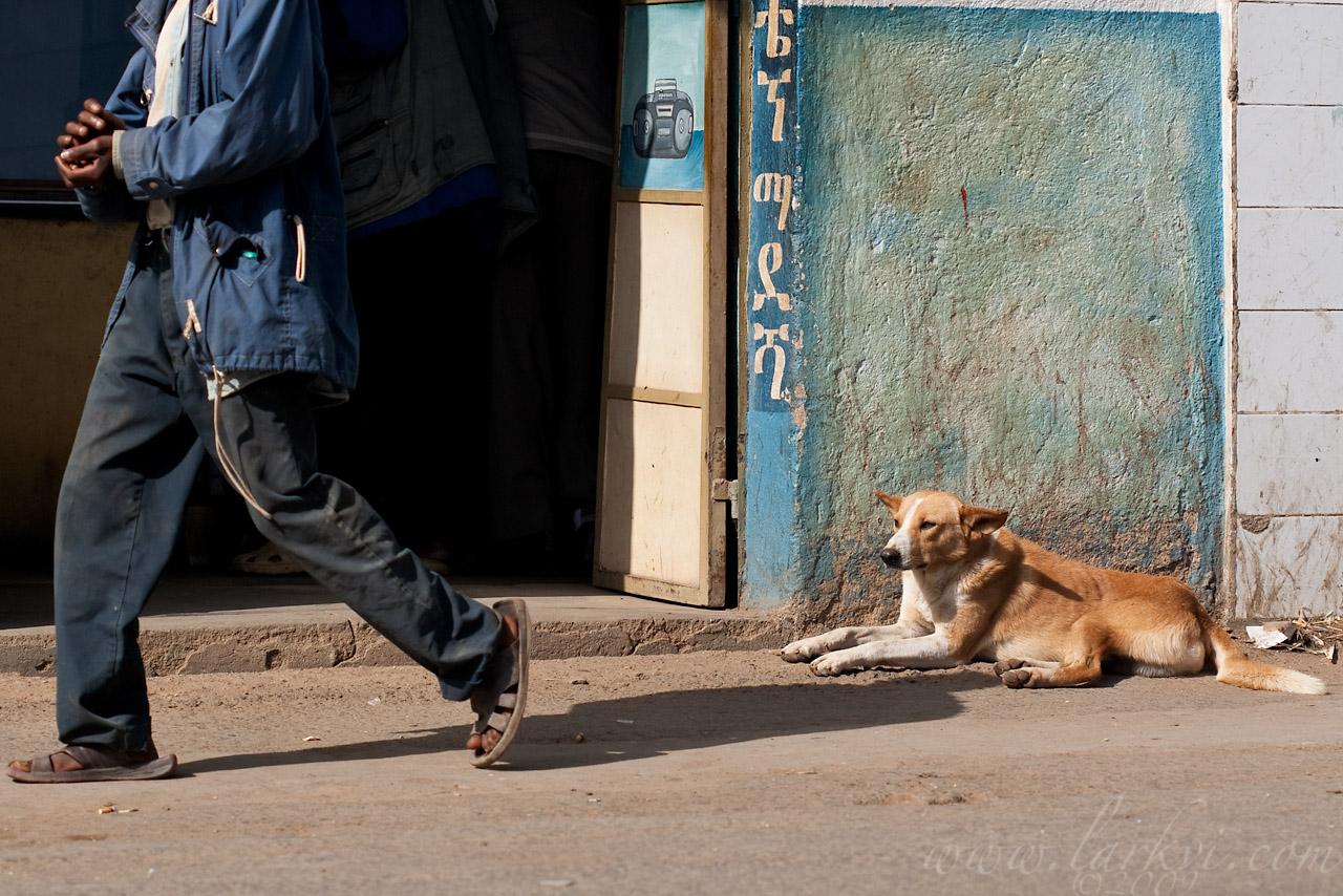 Dog #1(b), Harar, Ethiopia, August 2009