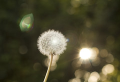 you will wake up. (Hoyuela) Tags: light espaa naturaleza flower luz nature canon eos rebel 50mm spain kiss f14 flor 400d