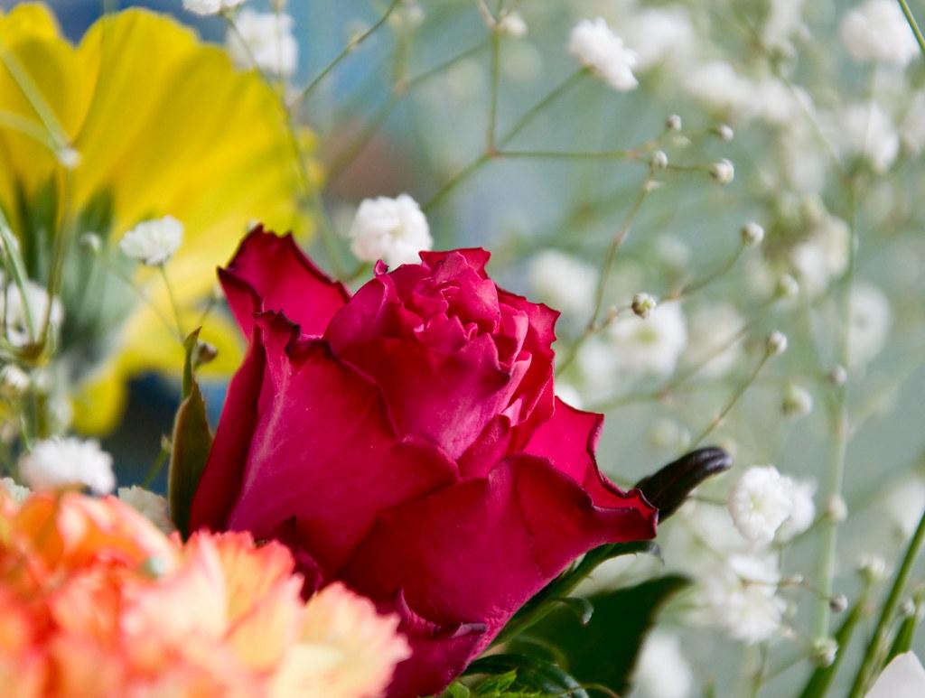 Cheap Flowers (365/27)