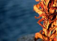 On the island (Utelias) Tags: autumn sea suomi finland meri syksy
