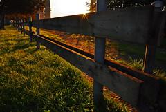 Coquitlam Sunrise (mybulldog) Tags: sun green grass sunrise fence nikon coquitlam sigma1020 nikond90