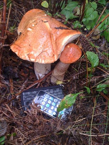 iPhone и грибочки