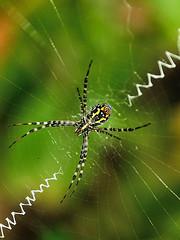 golden orb spider (aziouezmazouz) Tags: macro cute beauty amazing colours bokeh beautifulscenery bellissima naturesfinest awesomeshot vibrantcolours nicecapture beautifulcapture naturewatcher nikond300 stunningsupershot photoshopcreativo