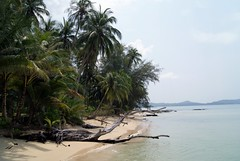 beached (Ali Catterall) Tags: ocean trees vacation holiday green tourism nature beautiful palms thailand island march spring asia southeastasia paradise peace palmtrees kohkood alicatterall kokut