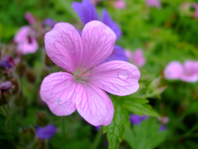 http://farm4.static.flickr.com/3485/5846217985_ca0d386719_o.jpg