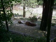 S4026175 (pappgabor) Tags: zoo veszprém 2007