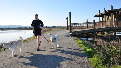 Jogger and his two dogs at the Palo Alto Baylands