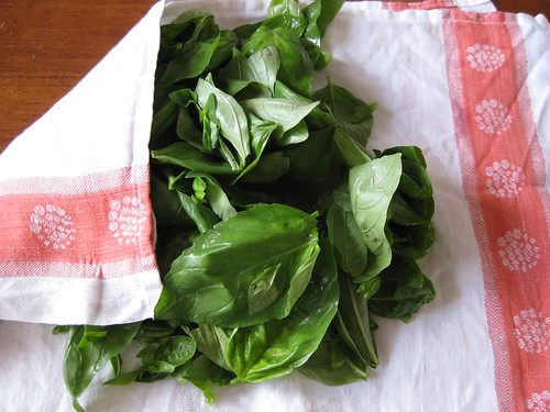 basil leaves for basil pesto sause