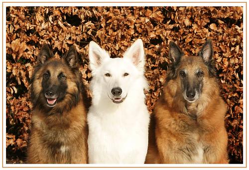 Hunde-Trio