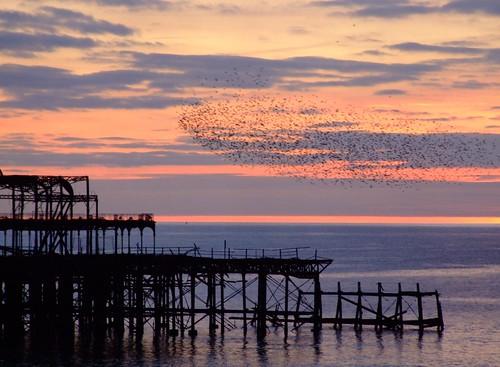 West pier and Starlings by Elsie on Flikr