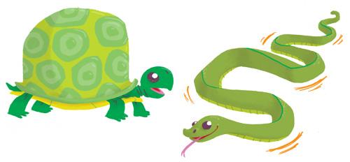 Turtle & Snake Spots