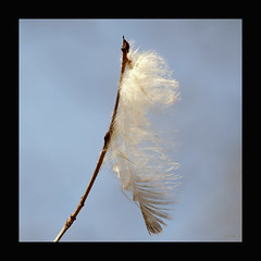 A Sign Of Peace (`Loriel) Tags: hope peace faith birdfeather aspiritualmoment