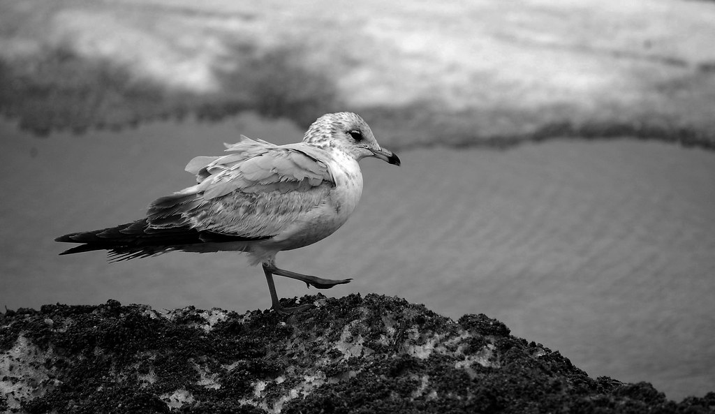 stupid groundhog said spring would be early this year, I so need to get the guys and carpet bomb him.