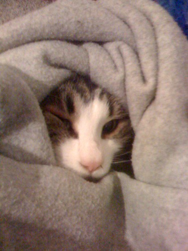 Biscuit in a Blanket