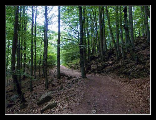 Ordesa - Camino normal a la Cola de Caballo