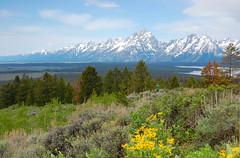 Grand Tetons from Signal Mountain (Chuck Martin) Tags: mountain landscape yellowstone grandteton