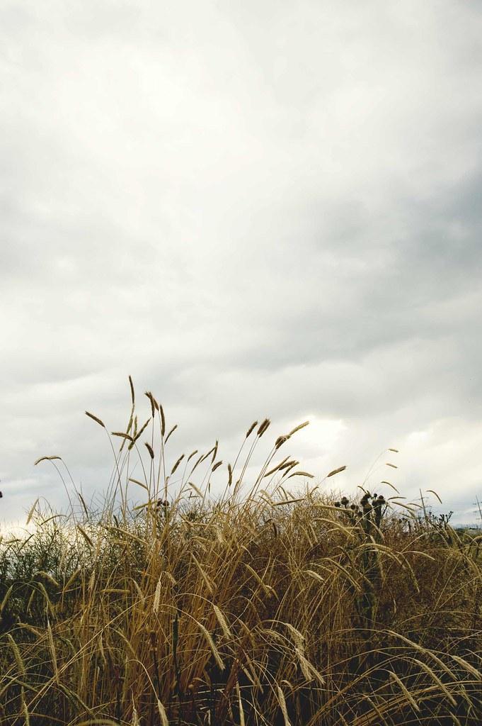 blog-weeds