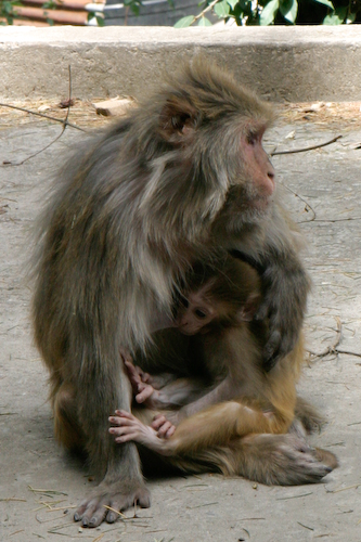 Monkey 6