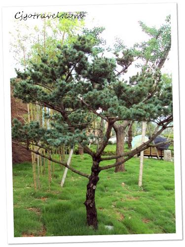 Wuyishan