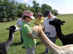 alpaca with GC board members