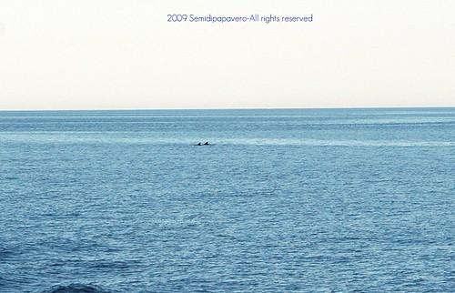 Delfini in avvistamento!