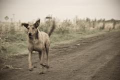 El Malevo ( SandroG) Tags: dog naturaleza parquesnacionales rain nationalpark lluvia perro garcia entrerios sandro elpalmar villaelisa sandrog sandrogarcia safaribaelpalmar