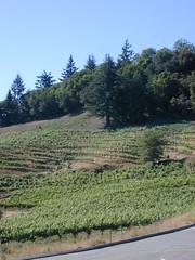 David Bruce Winery (tiny red warrior) Tags: california santacruz mike vineyard winery winetasting northamerica sasha wineries davidbruce
