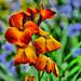 DSC_0007-01 - my garden summer
