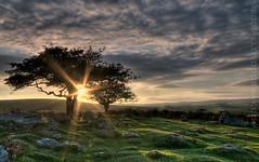 DARTMOOR ([DEVONshots.com] Lloyd W.A. Cosway) Tags: sunset sun tree devon dartmoor hdr sunray d300