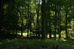 _MG_6429.JPG (zimbablade) Tags: trees sleepyhollow dougmiller videopoem