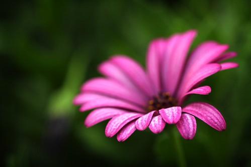 i'm so daisy