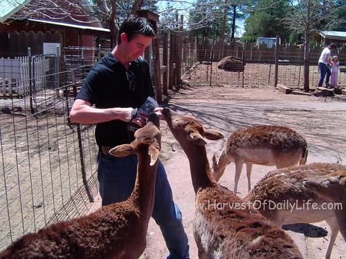 n-feeds-deer-may-5-2008