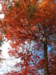 Bright fall color (Moores Springs, North Carolina, United States) Photo