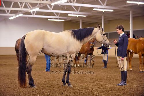 June 6, 2009 horse show: Halter