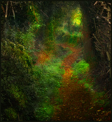 Fairy Path (Andrea Kennard) Tags: autumn trees leaves path fairy