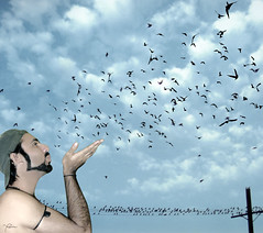 Feel Freedom and Fly away