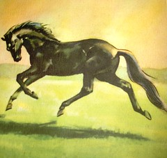 horses 11-2 076