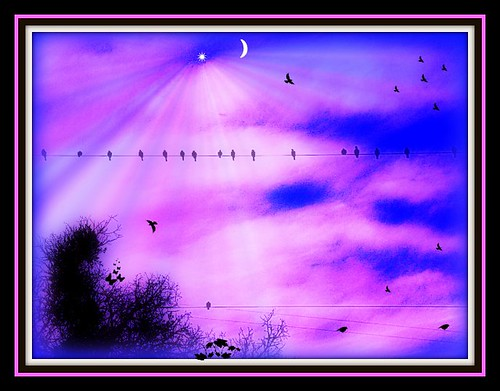 "~""Birds On A Wire""~"