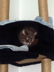 Kashim exploring the cat condo (Sally's realm)