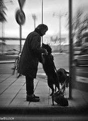 Bisognerebbe esser Cane... (Ushu@ia) Tags: bw dog cane friend friendship explore amicizia amico fidelity fedelt theunforgettablepictures journalistchronicles