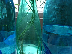 (jili'm **) Tags: blue plant detail green home bottle plastic transparency cutting myeverydaylife