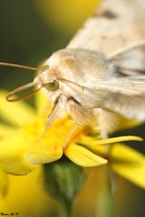 Yellow World (Nouf Alkhamees) Tags: world macro yellow canon insect first insects kuwait try alk nono nof  alkuwait    nouf      wonderfulworldofflowers