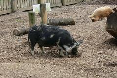 Hamilton Zoo - Feb 2008 (29) (Roddi's photos) Tags: feb2008