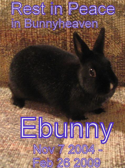 in memory of Ebunny