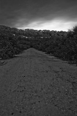 Camino a ninguna parte / Road to Nowhere land (Nhelios) Tags: road longexposure trees bw blancoynegro night forest way arboles camino path bn bosque nocturna algeciras largaexposicion campodegibraltar 450d rebelxsi
