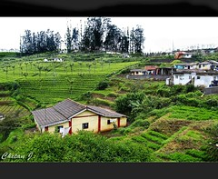 Ooty (Jchetan) Tags: morning india green landscape fantastic awesome ooty canon1740l canon450d chetanj